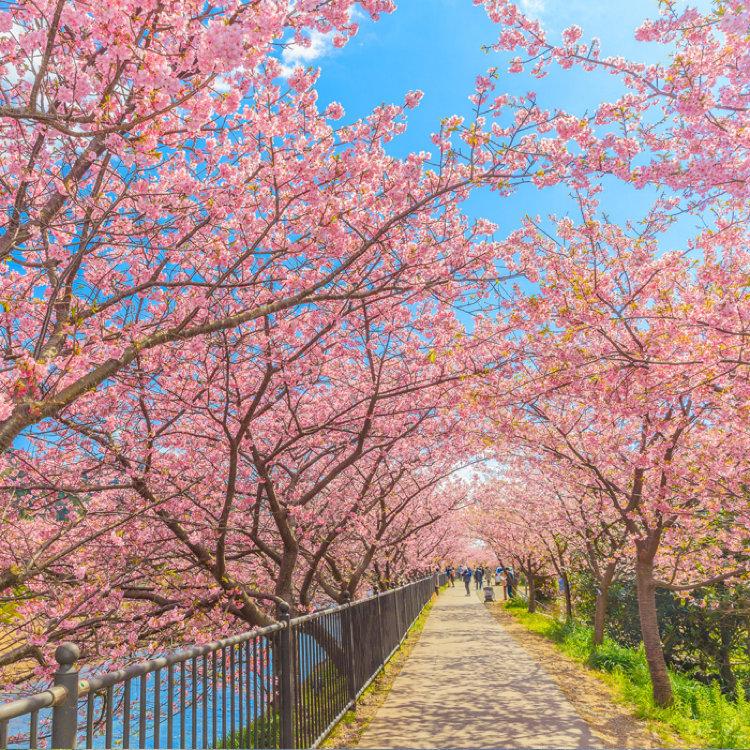 日本の風物詩