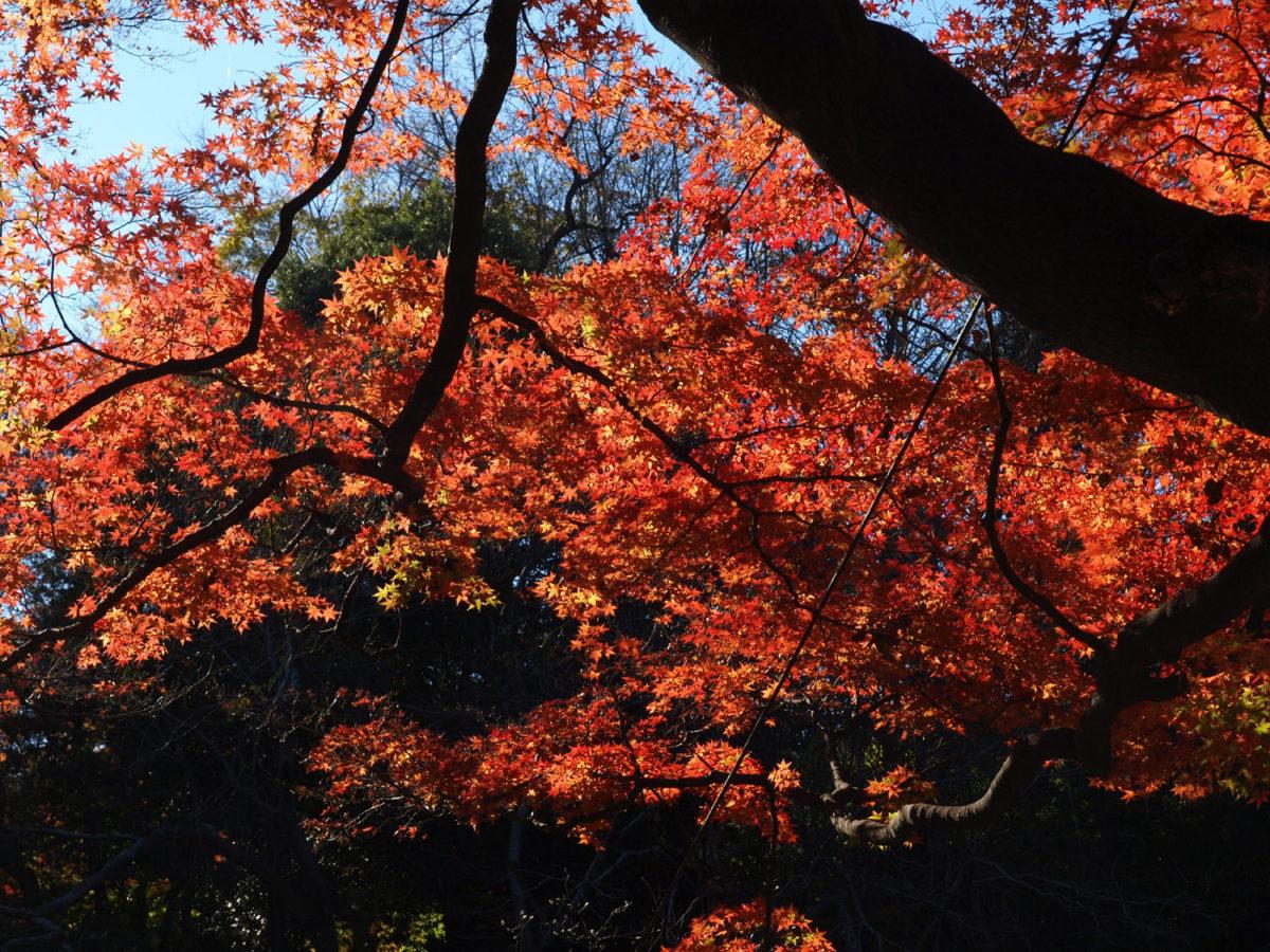 紅葉狩りに耽る ~Autumn colors~